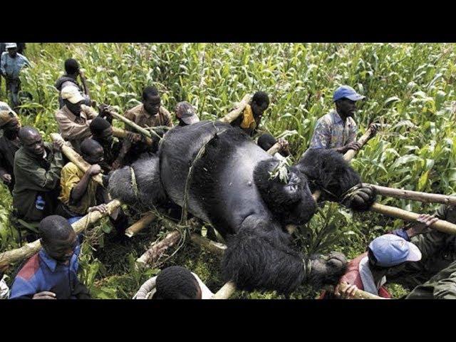 5 Forgotten Animals That May Go Extinct!