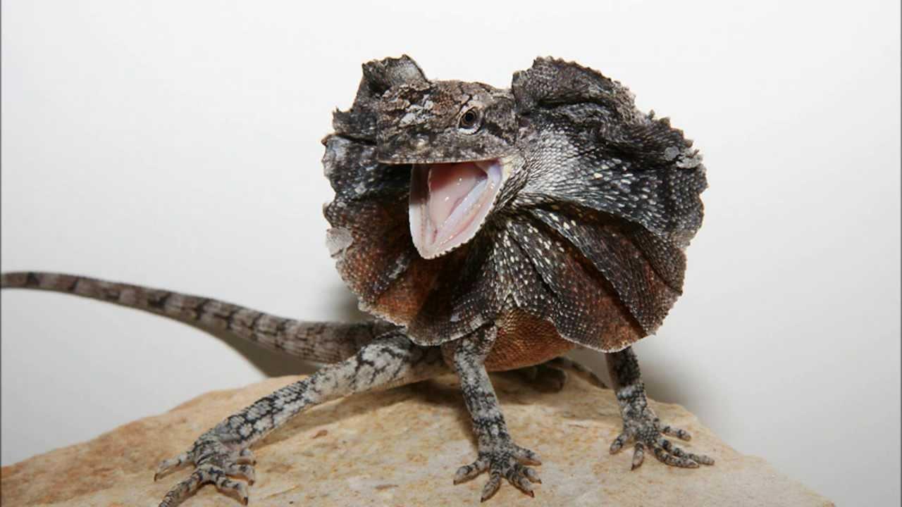 Reptile Enclosure Plans