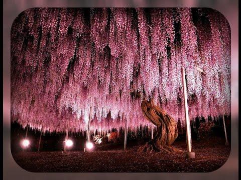Самые причудливые и красивые деревья мира