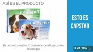 Esto es CAPSTAR para perros y gatos