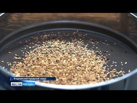 Магаданская область бьет рекорды по добыче золота