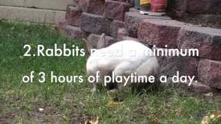 10 Tips About Owning A Rabbit