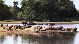 Passeio pelo Pantanal MS
