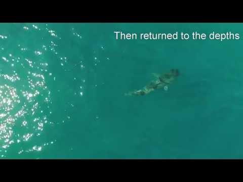 Kamaole Beach Park I II 1 2 Maui Tiger Shark DJI Phantom 3 Advanced Drone