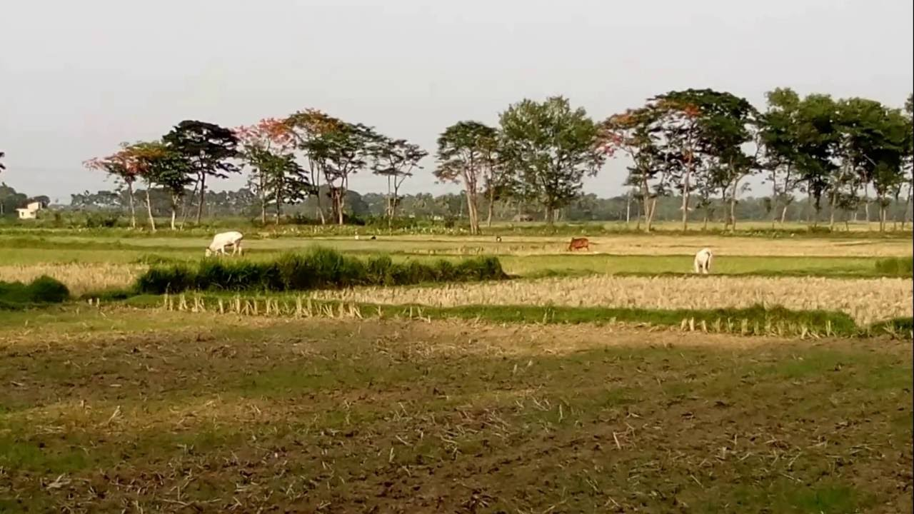 Cultivation Field of a Village of Hooghly District of West Bengal India