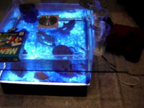 coffee table fish tank and my 6 foot oscar tank - youtube