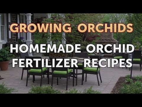 Homemade Orchid Fertilizer Recipes