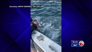 Boaters rescue dog in the middle of the ocean