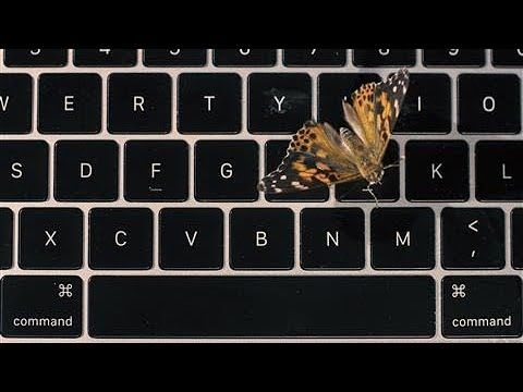 Apple's Faulty MacBook Butterfly Keyboard Explained... With Real Butterflies | WSJ