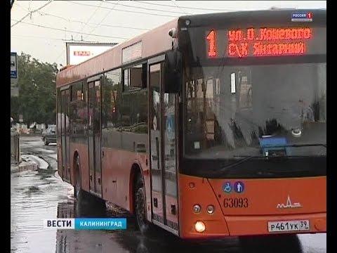 Все автобусы «Калининград-ГорТранса» обещают выпустить на маршруты в ближайшее время