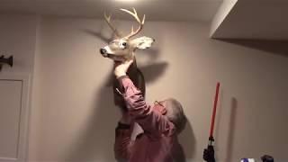 Hanging a deer mount