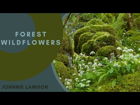 8 Hour Relaxation-Nature Sounds-Birds Singing-Mindfulness Meditation-Sound of a Forest