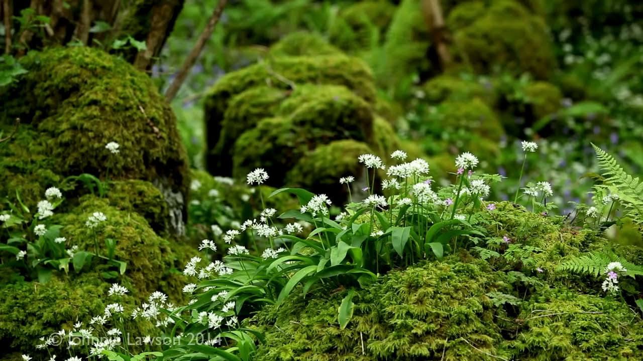 Image result for forest mindfulness meditation
