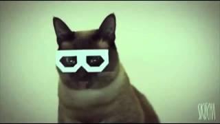 Dubstep Hipster Cat Remix