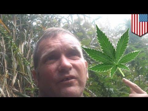 Lalaki, nag-post ng video ng hardin ng marijuana sa YouTube; nahuli ng pulis!