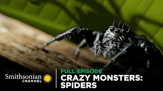 Crazy Monsters: Spiders  FULL EPISODE | Smithsonian Channel