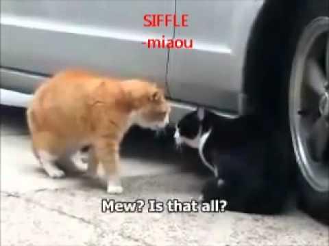 Conversation d\u0027un chat drogué, traduit en anglais et francais , YouTube