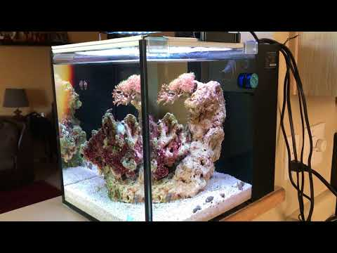 Octopus Nano Tank | Innovative Marine 10 Gallon