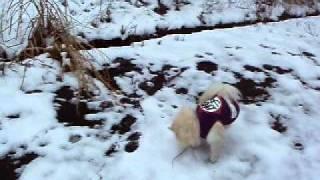 山荘にて雪遊び2.