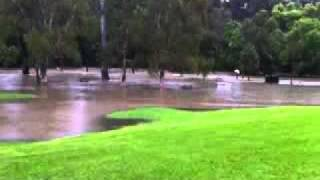 Kedron Brook in flood: Kalinga Park, October 12, 2010