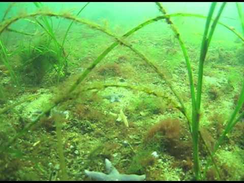 Diving in Kiel - Baltic Sea
