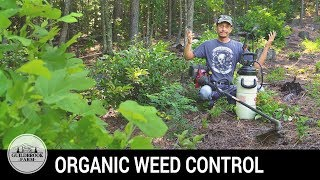 Killing the Weeds and NOT the Chickens! Glyphosate FREE Herbicide