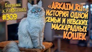 Глазами животных #309. «ARKAIM*RU» - история одной семьи и невских маскарадных кошек