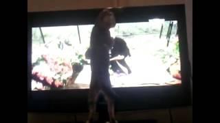 кошки и телевизор