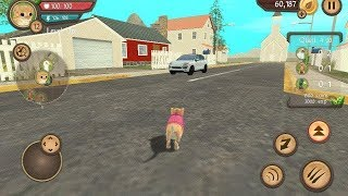 Cat Sim Online: Play with Cats Android Gameplay Ep 31