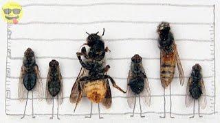 Swedish Artist Magnus Muhr Uses Dead Flies to Make Art