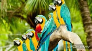 Красота животных