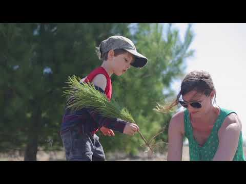 Goals For Trees: Toronto FC Plants 10,000 Trees In Ontario, Canada | One Tree Planted