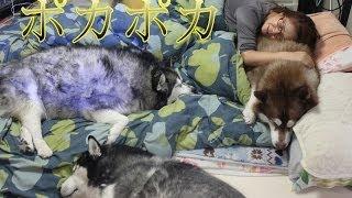 冬の我が家の日常ですが、こたつには大きくて無理ですが 布団で寝てる40...