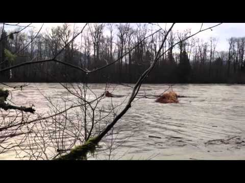 Large wood transport by flood on the Skagit River