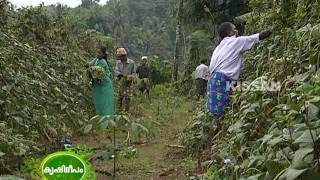 Success story of a vegetable farmer engaged in farming in more than eleven hectares of leased land