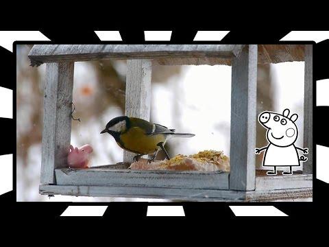 Розвиваючі мультфільми українською мовою. Свинка Пепа годує салом синичку в годівничці