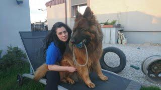 Reakcja psa na udawany zgon właściciela