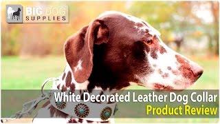 Labrador Retriever, Bullmastiff And Dalmatian Wearing White Decorated Dog Collar