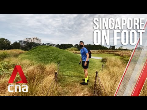 "Singapore on foot: Day 1 - the ""lone tree"", otters and a 30km walk"