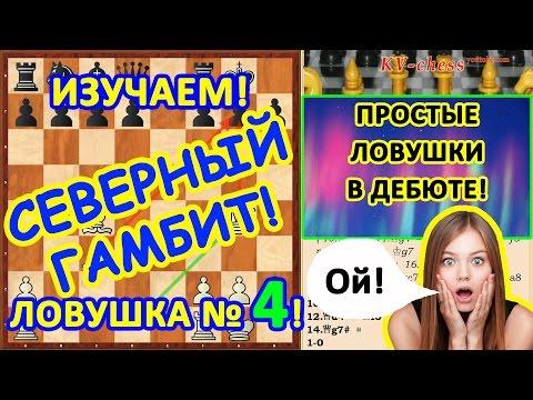 Простые шахматные ловушки в дебюте Северный гамбит!