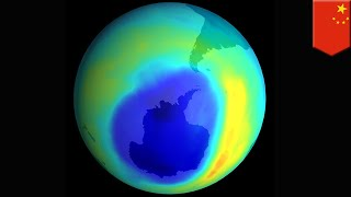 Rise of banned chemical usage hurting Earth's ozone layer - TomoNews