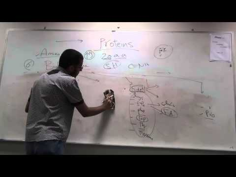 Proteins Chemistry By AbdelRahman Assal