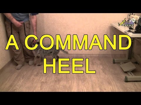 training-at-home-a-command-heel
