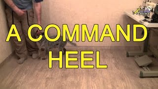 Training At Home  A Command Heel