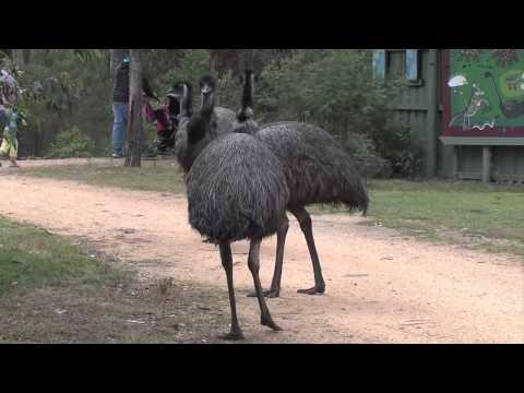 Emu Sound
