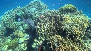 В царстве кораллов