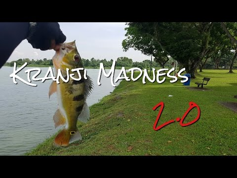 Fishing In Singapore: Kranji Madness V2.0, June 2016