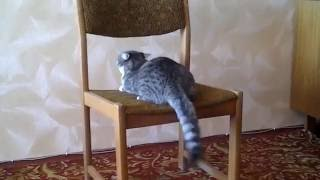 Cats doing sports  Funny compilation