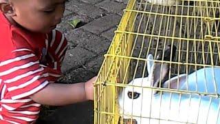 Anak Umur Setahun Beternak Kelinci