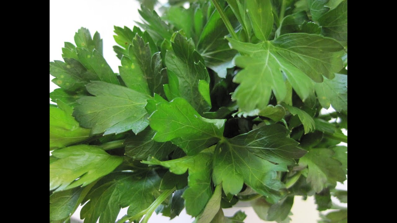 How to keep parsley in winter